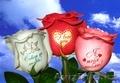 Цветы Цветы Цветы